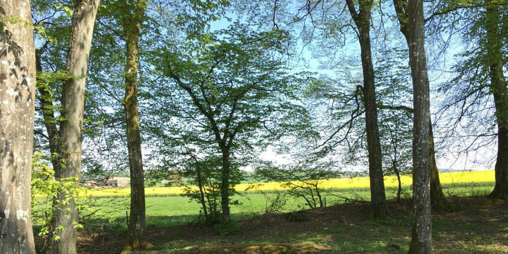 La forêt de Zoufftgen